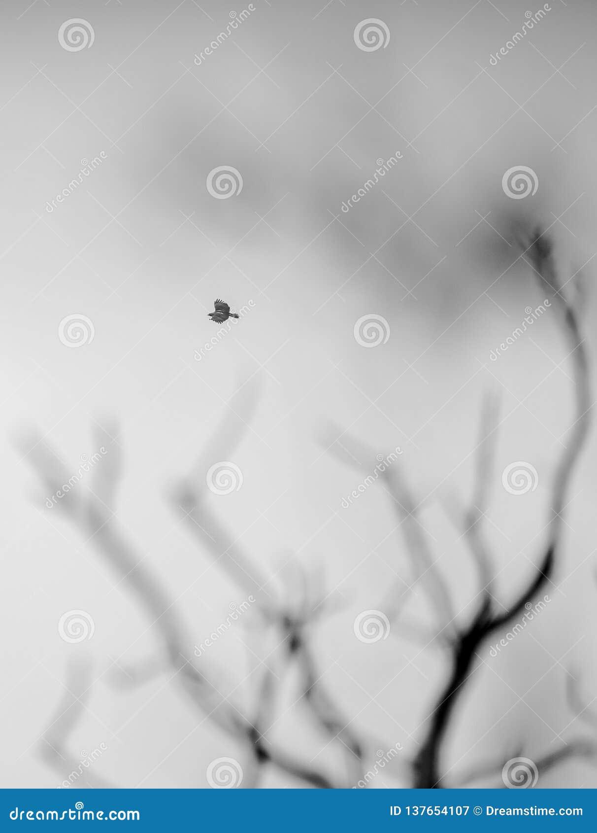 Eagle lota abstrakcjonistyczni markotni drzewa