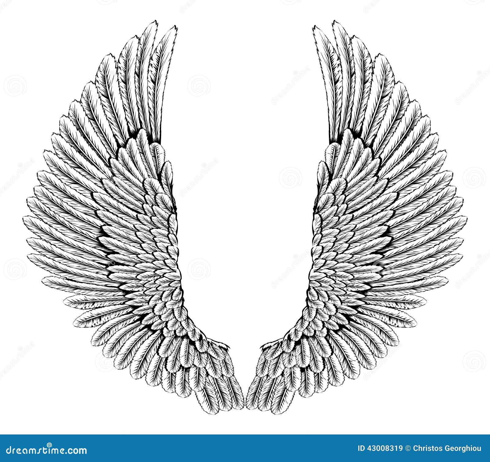 Eagle ou ailes d 39 ange illustration de vecteur image - Ailes d ange dessin ...
