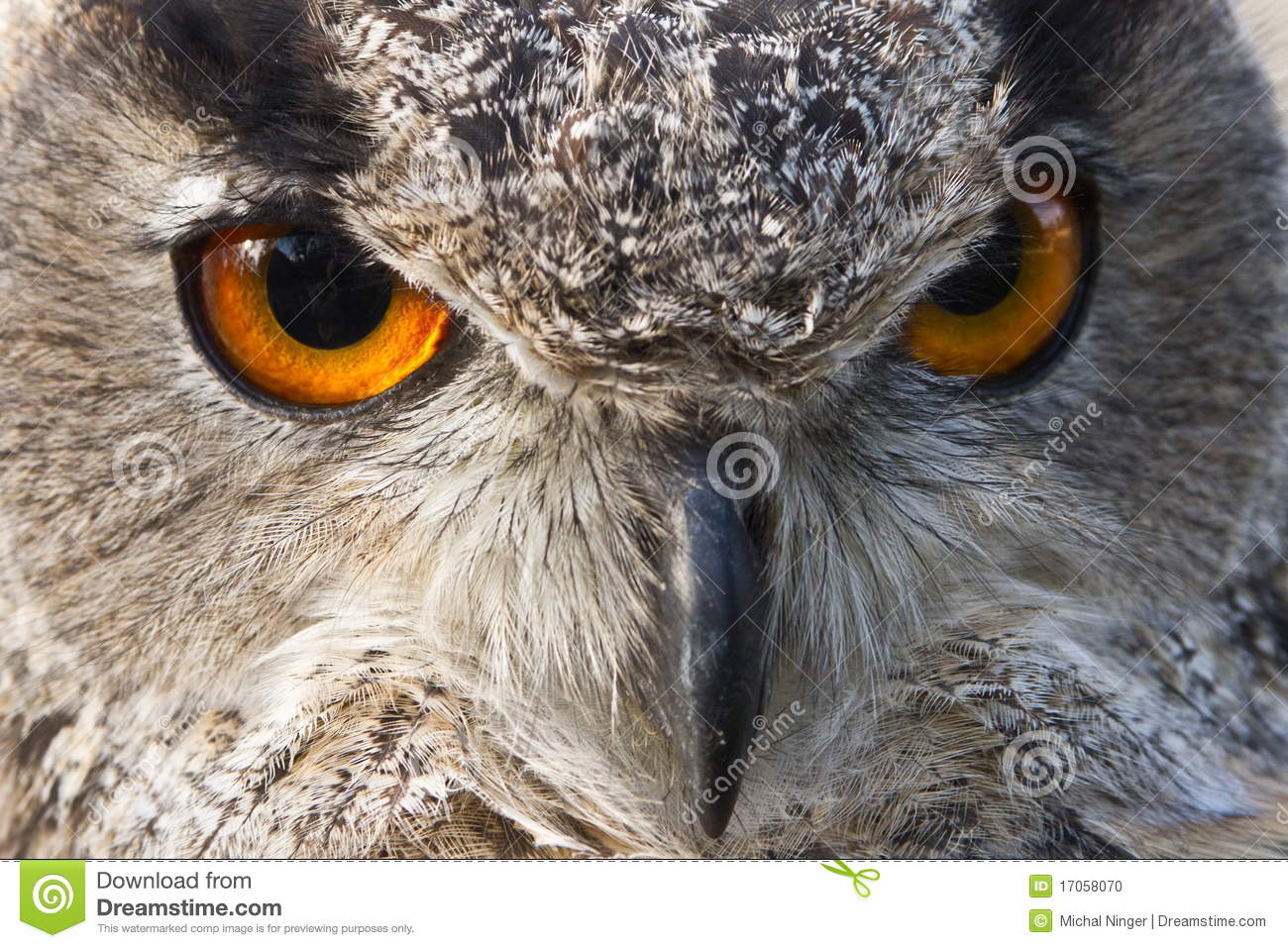 owl eyes on you webs