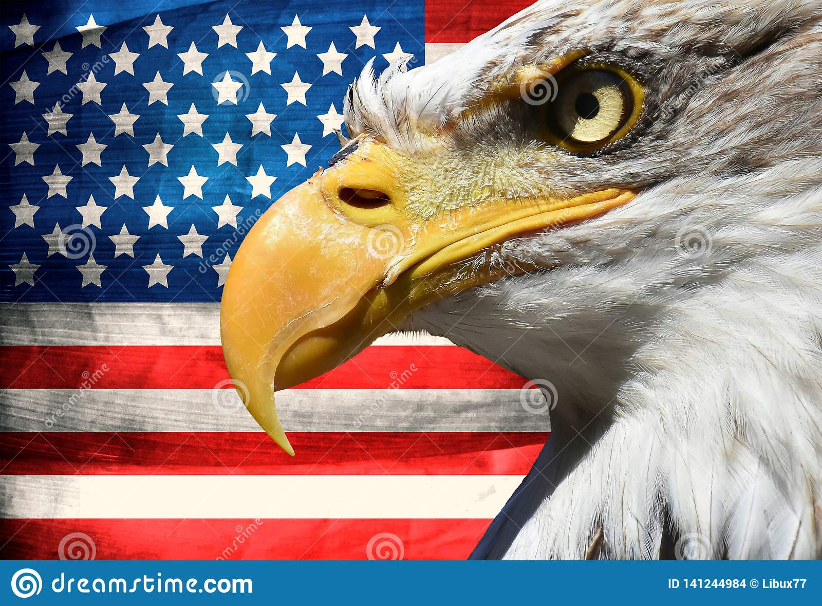 Eagle portreta zbliżenia symbol usa lub my lampasy i gwiazdy zaznacza