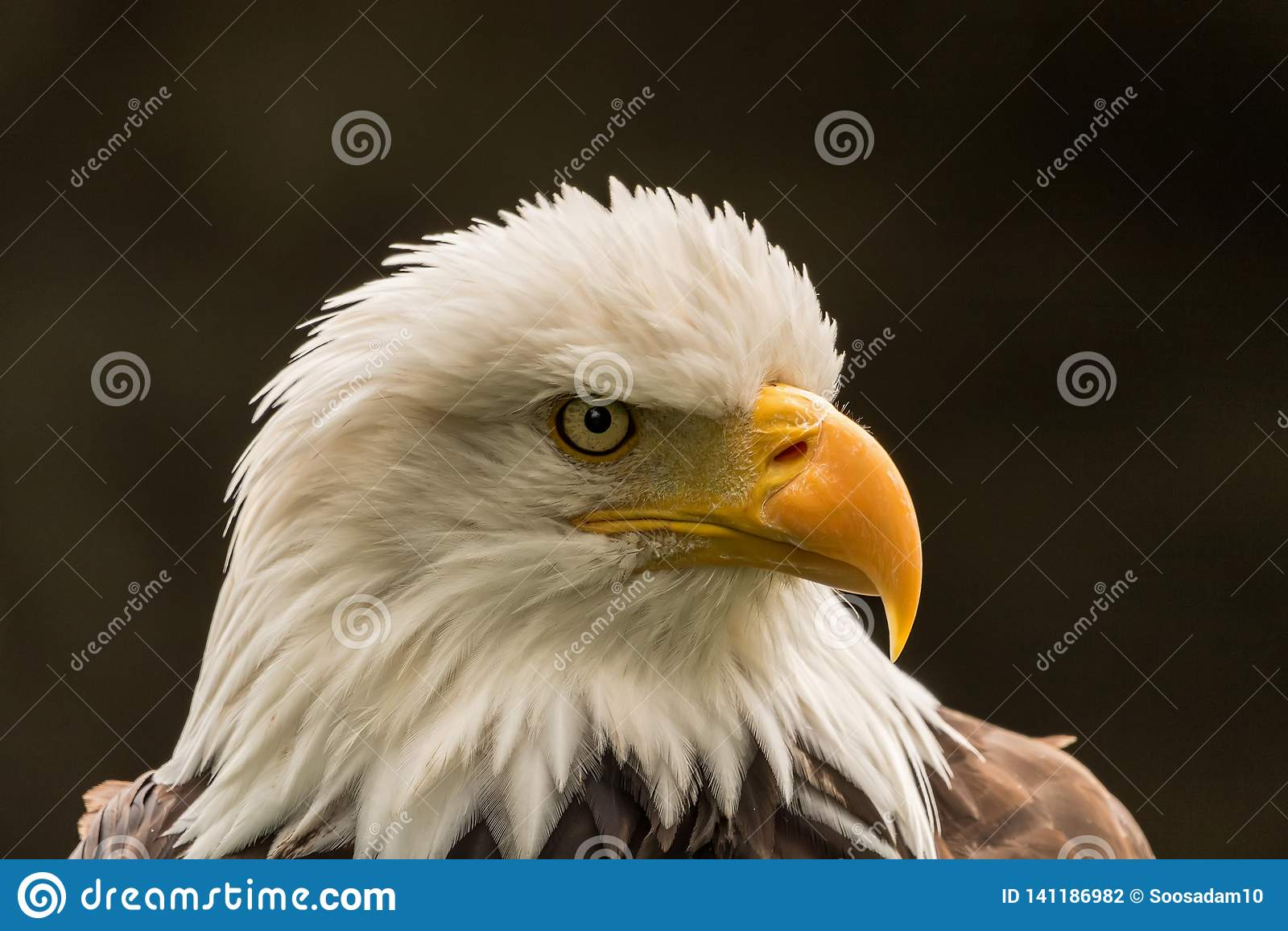 Eagle pour le président