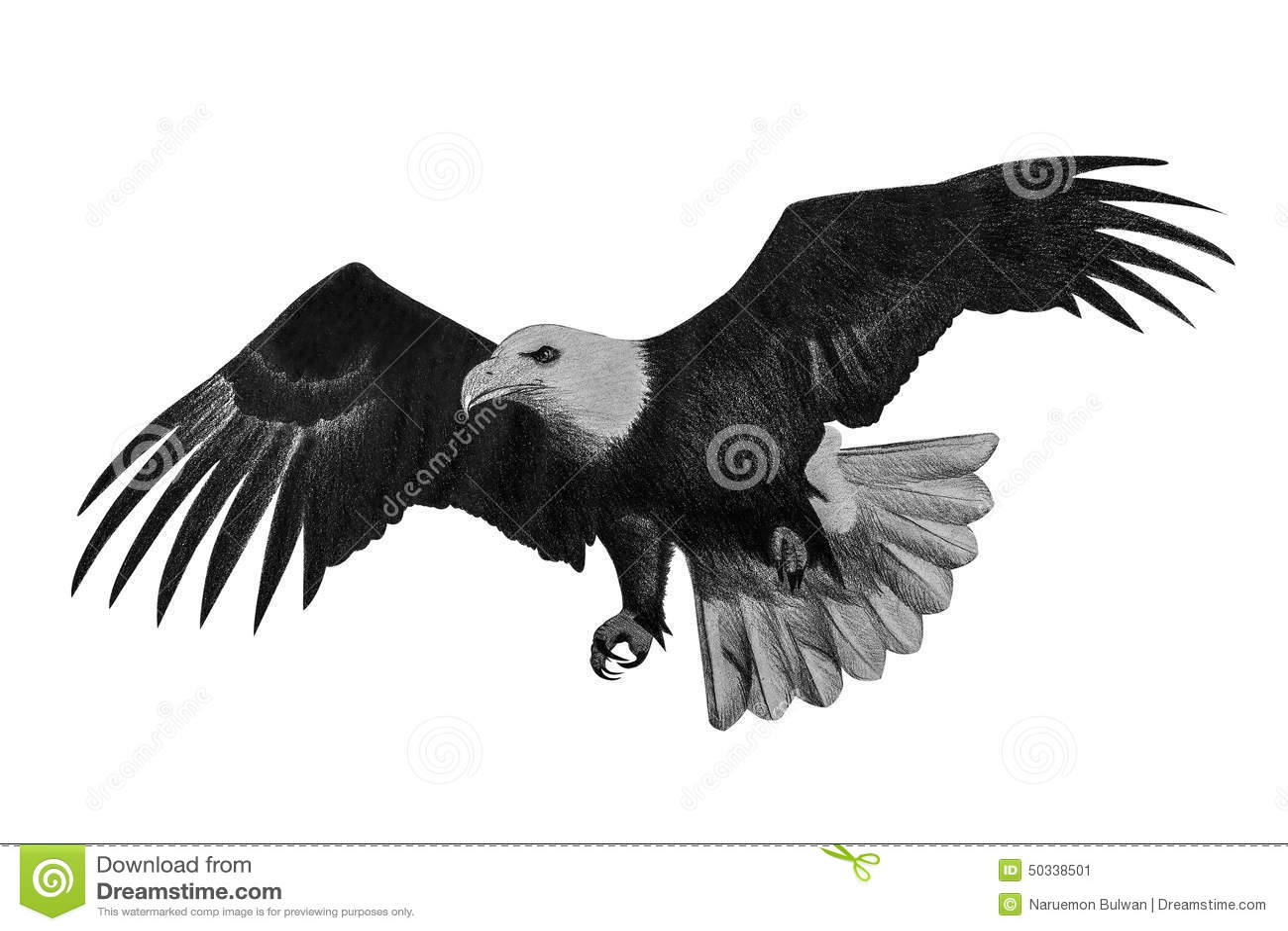 Eagle Rysunek Ołówkiem Ilustracji Ilustracja Złożonej Z Ołówek