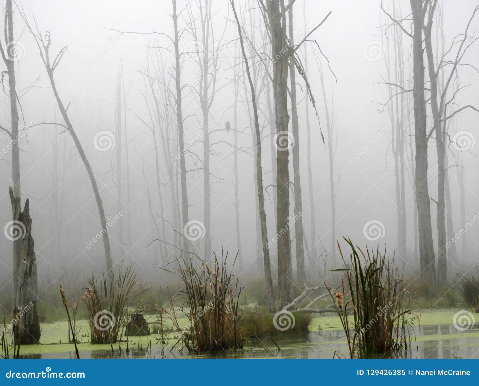 Eagle se sienta en la rama de árbol del pantano ocultada en la niebla