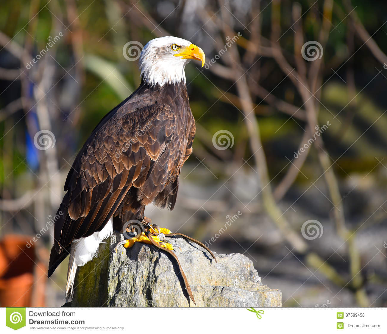 Cute Eagle Cadsoft Free Download Images - The Best Electrical ...