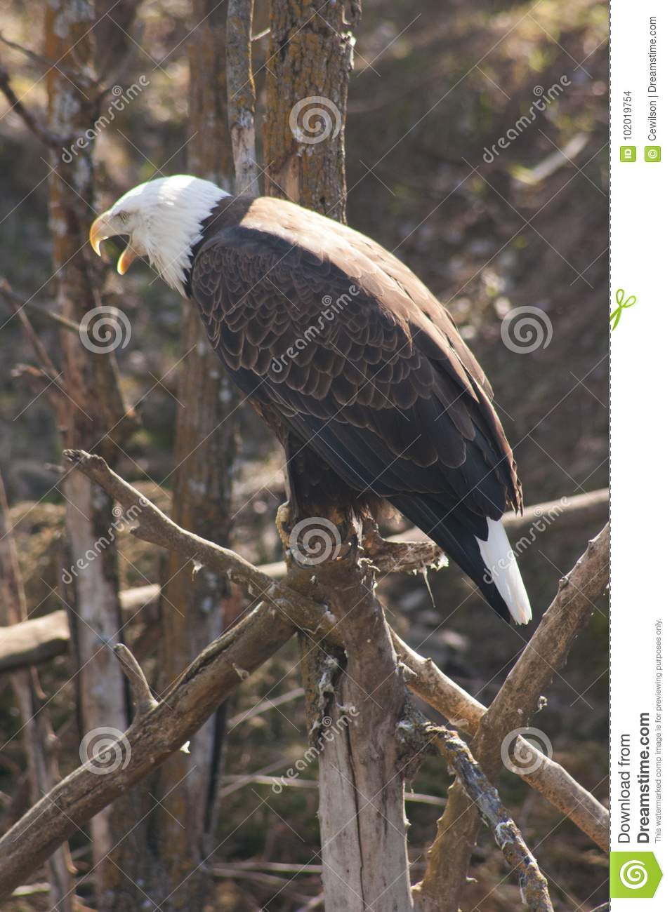 Eagle song free audio books trial.