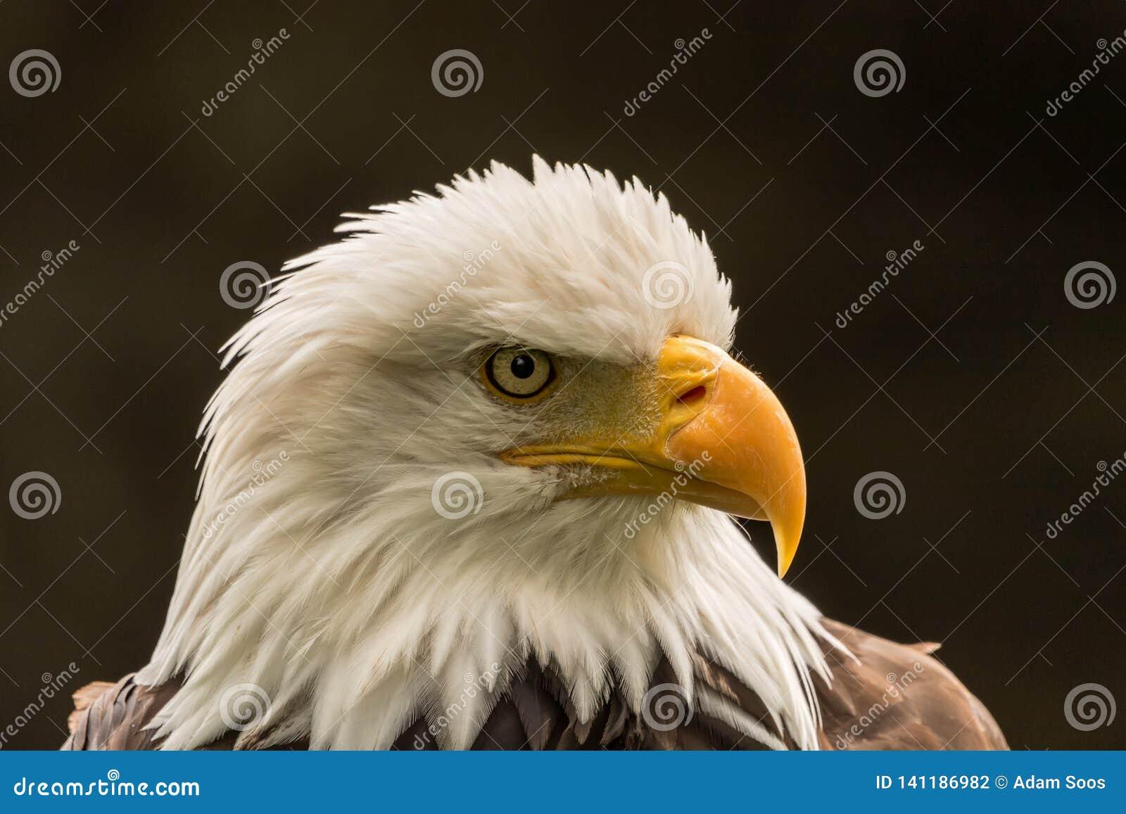 Eagle voor Voorzitter