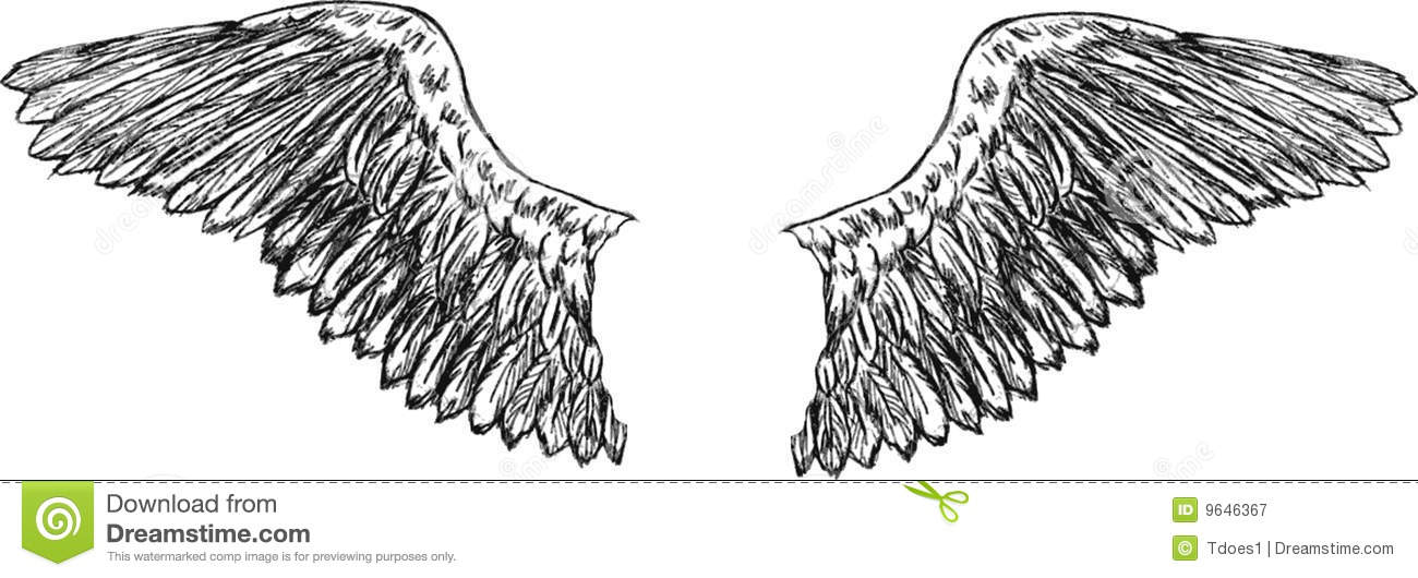 Eagle wings vector  Eagle Wings Drawing