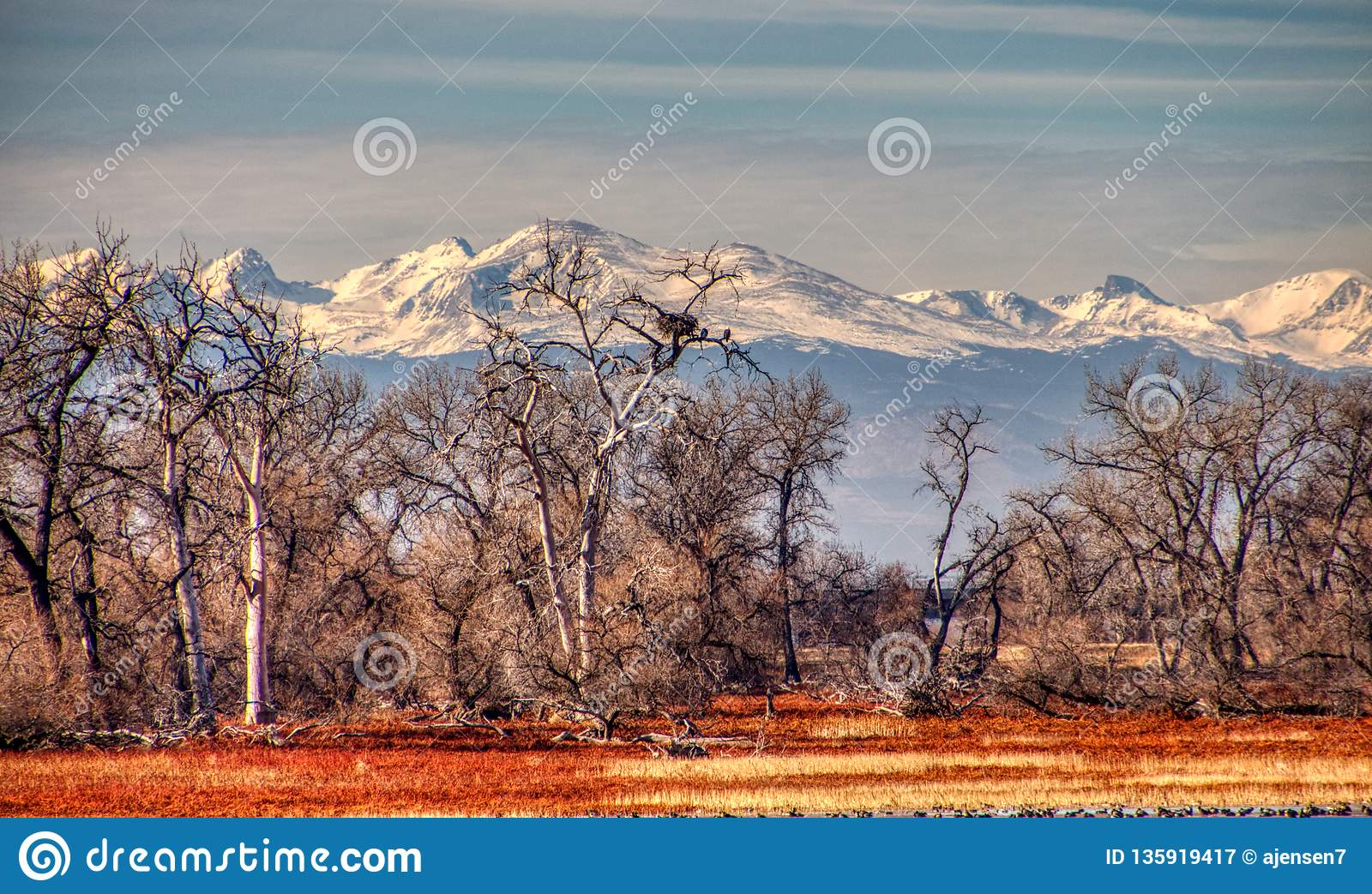 Eagles bij hun nest in Colorado Rockies