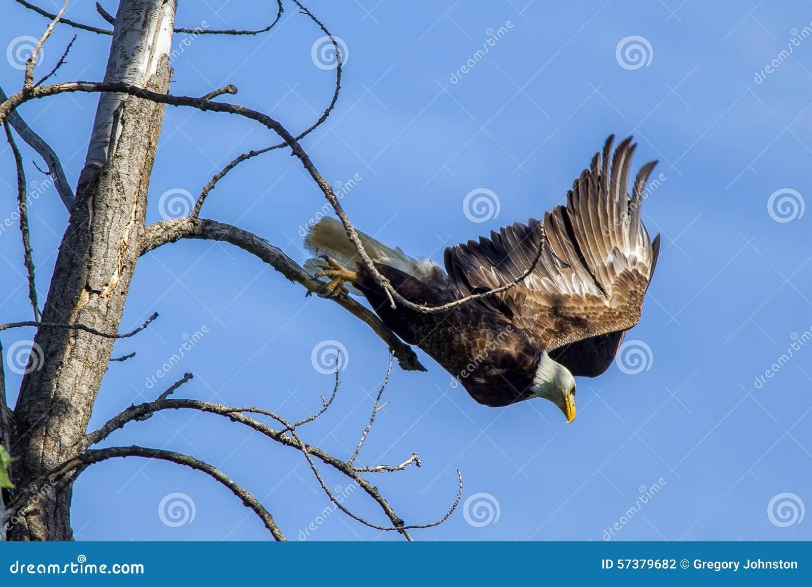Eagles stijgt van tak op