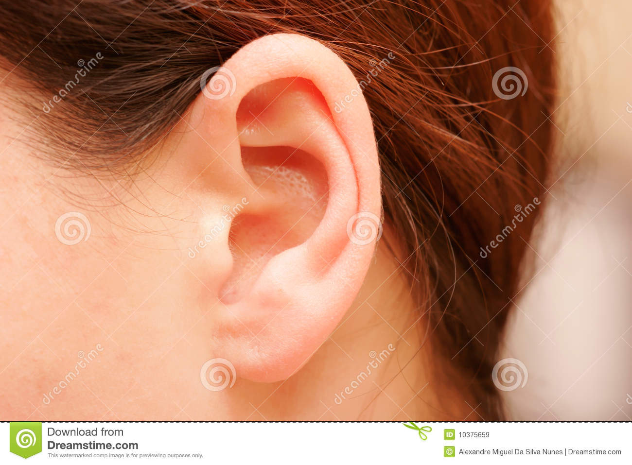 Ear Royalty Free Stock Images Image 10375659