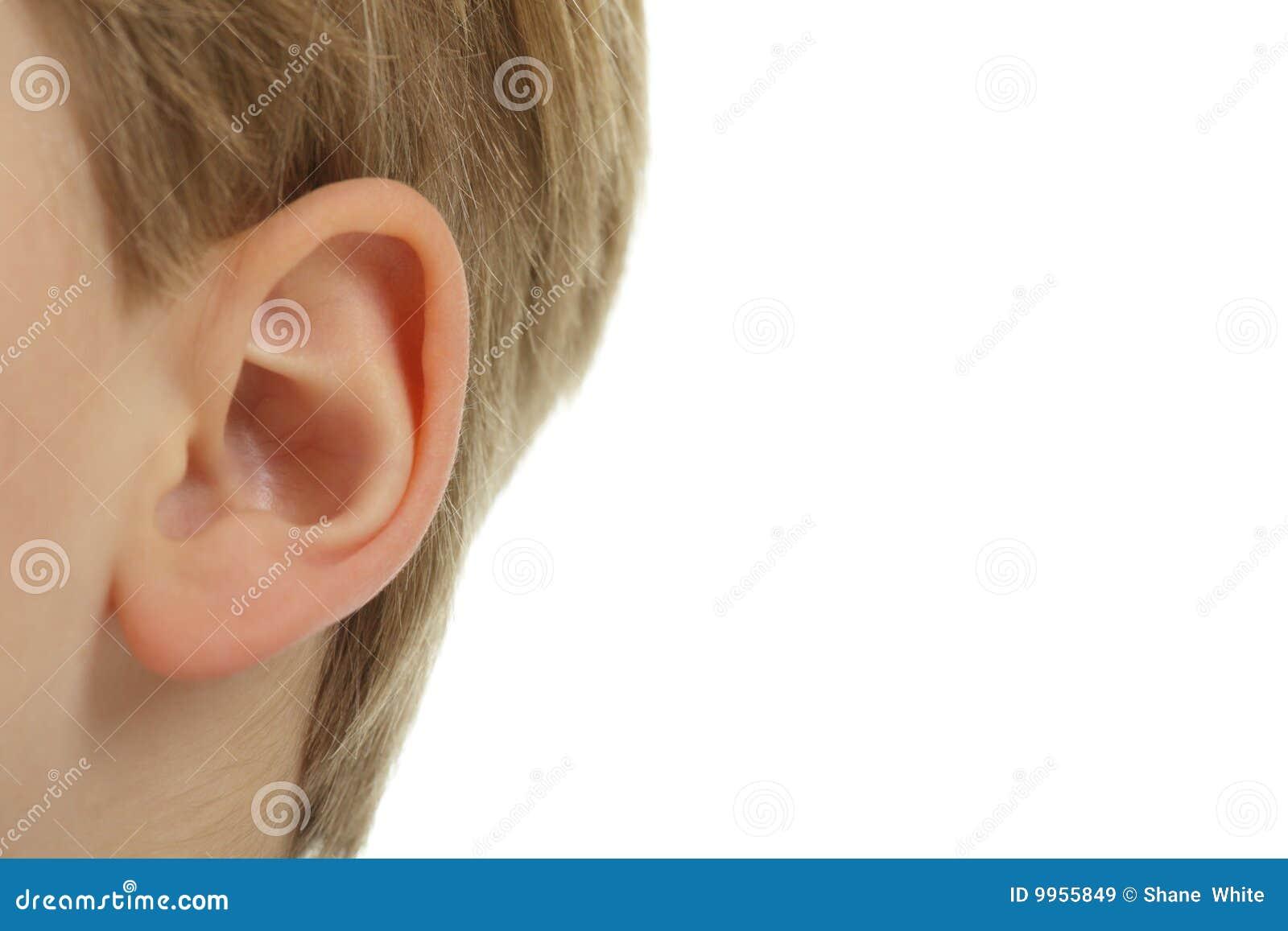 The ear.