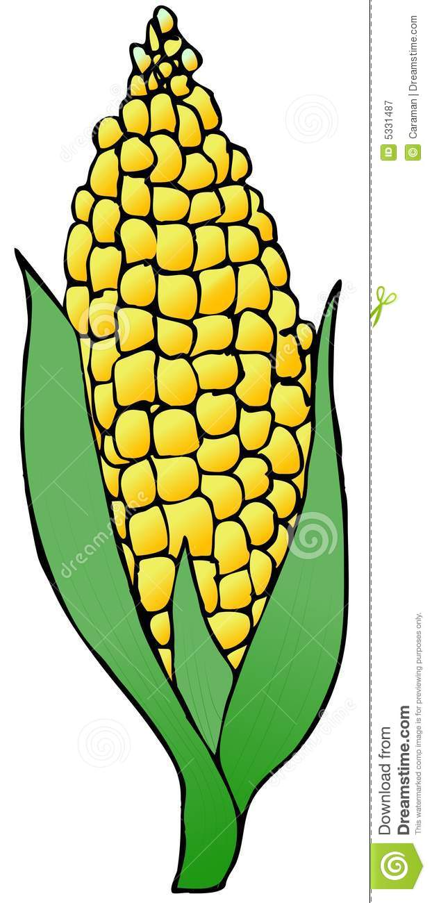 ear of corn clip art