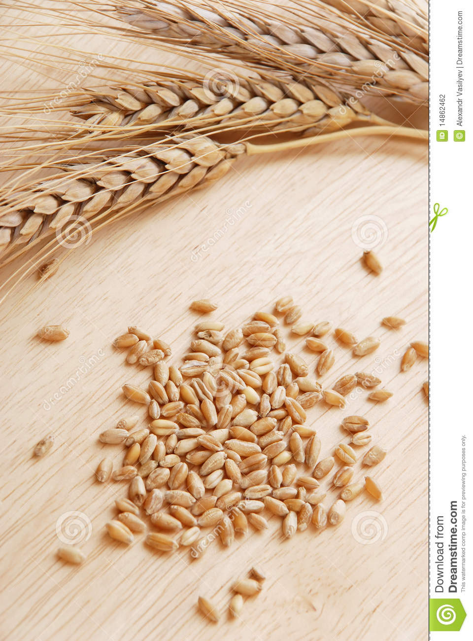 Ear and grain of the wheat