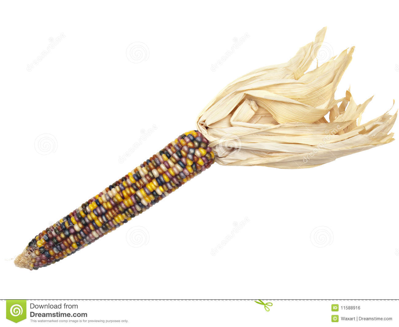 Ear Of Indian Corn On White Royalty Free Stock Image - Image: 11588916