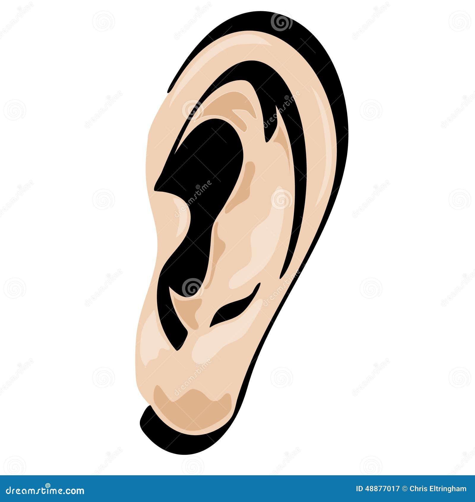 Illustration Stock Ic Ne D Oreille Image46751325 besides Stock Illustration Ear Vector Cartoon Shaded Isolated Image48877017 in addition Listen additionally E5 8D A1 E9 80 9A E5 B0 8F E7 8C AB E5 92 AA E5 9B BE E7 89 87 in addition Lions. on cartoon ears clipart