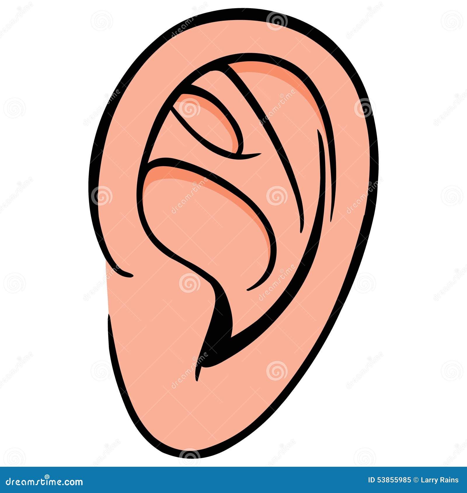 ear stock vector image 53855985 Ear of Corn Coloring Page Ear of Corn Coloring Page