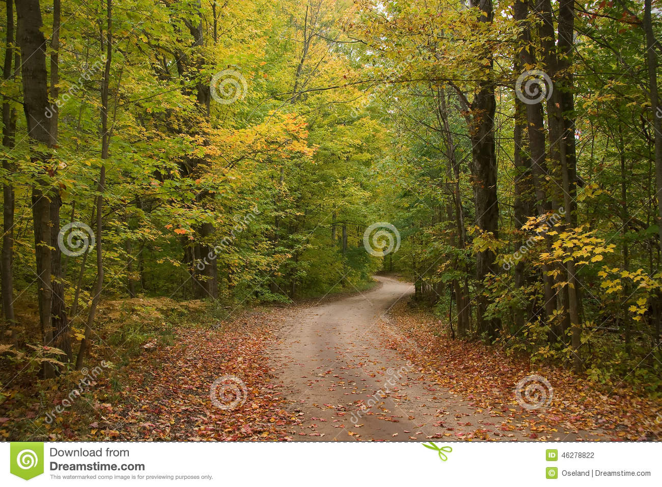 Early Autumn Tree Lined Dirt Road