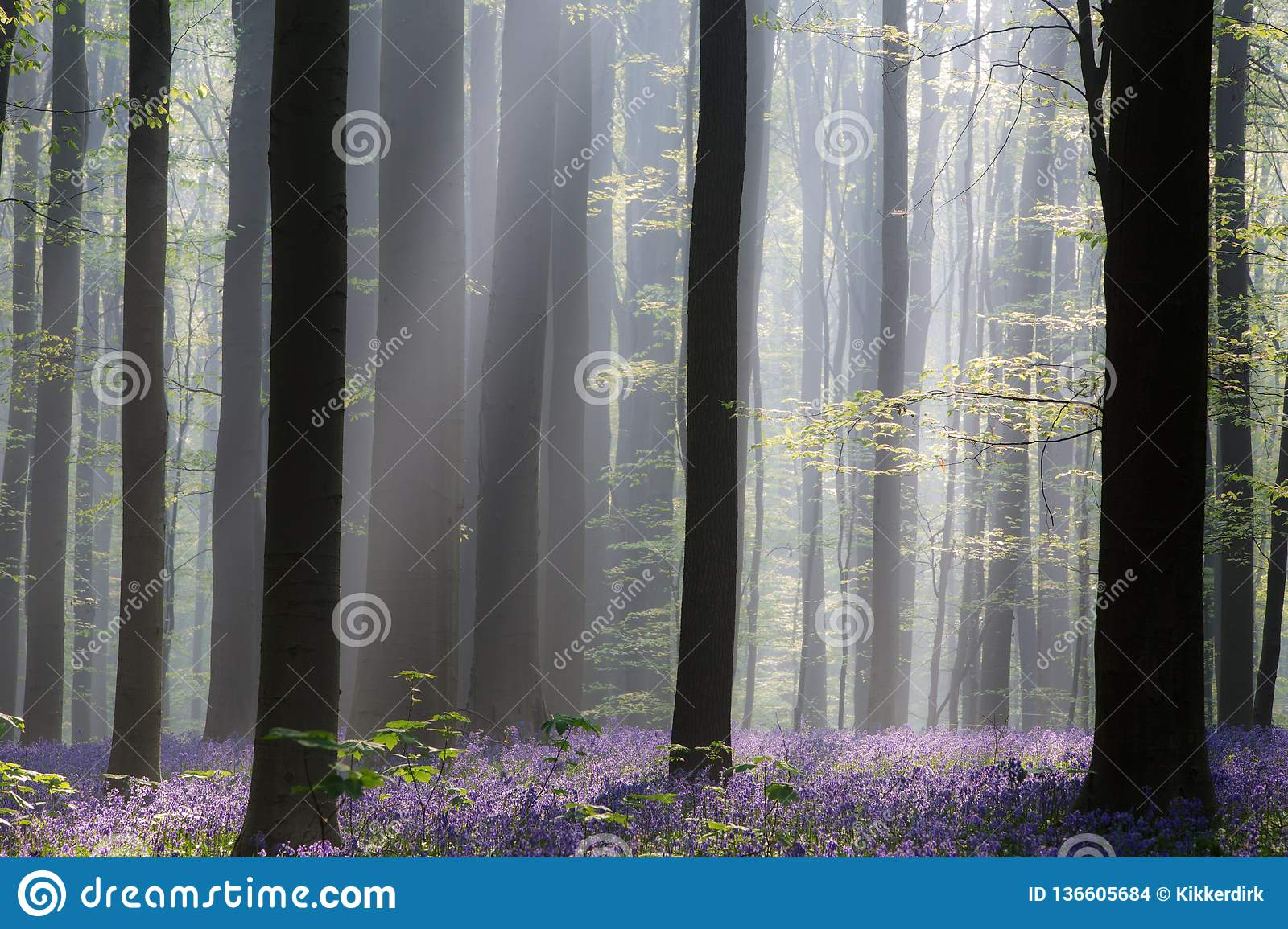Early morning first sun light in a spring forest