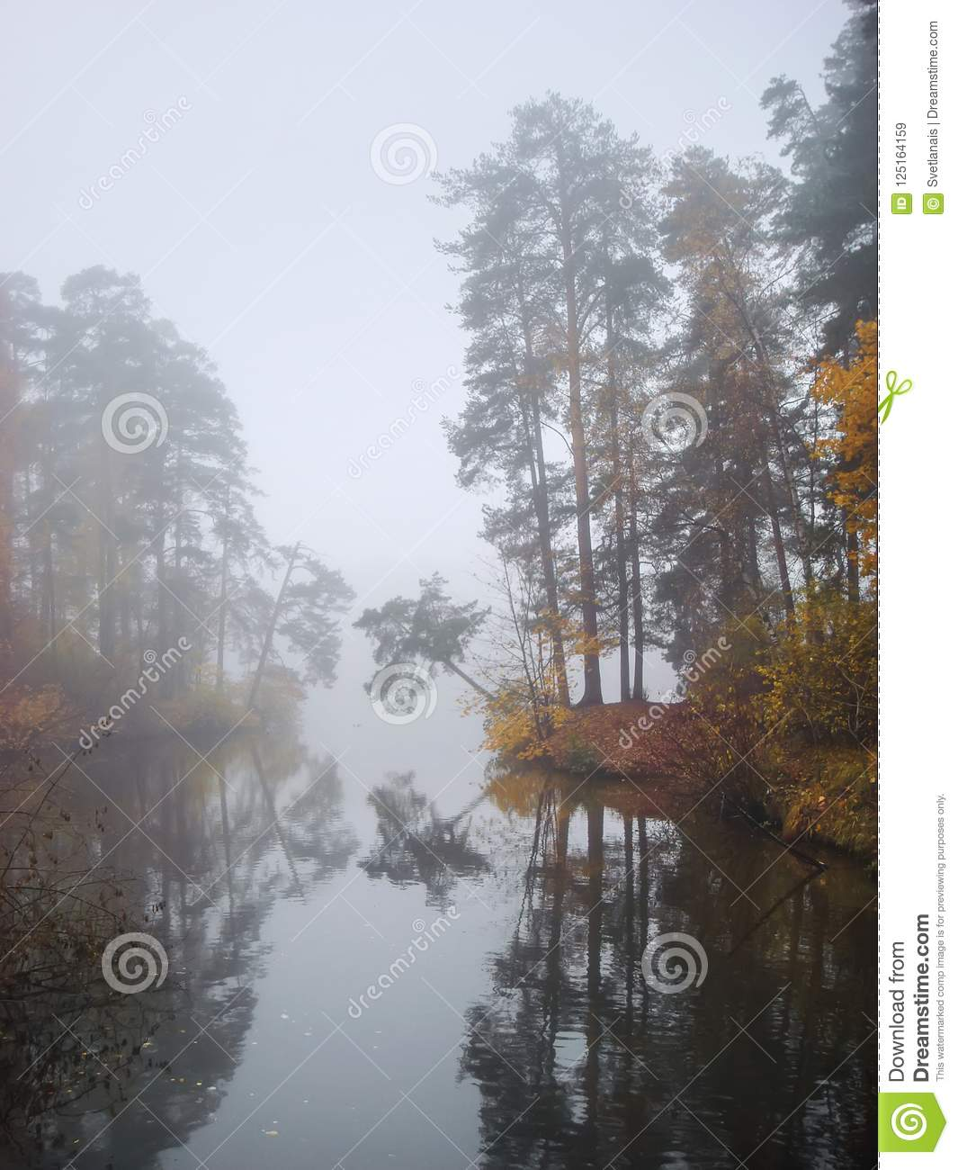 Surreal Ethereal Forest With Fog Royalty-Free Stock