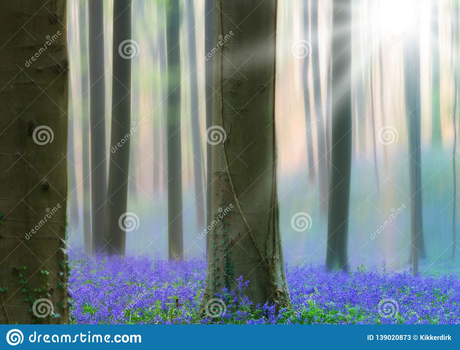 Early morning light spring forest with violet blue bells in the foggy mist