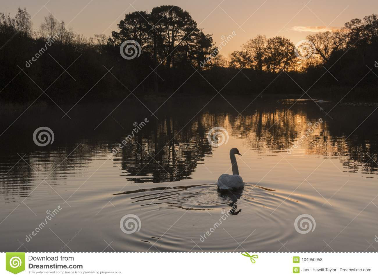 Early morning on the Ornamental Pond, Southampton Common