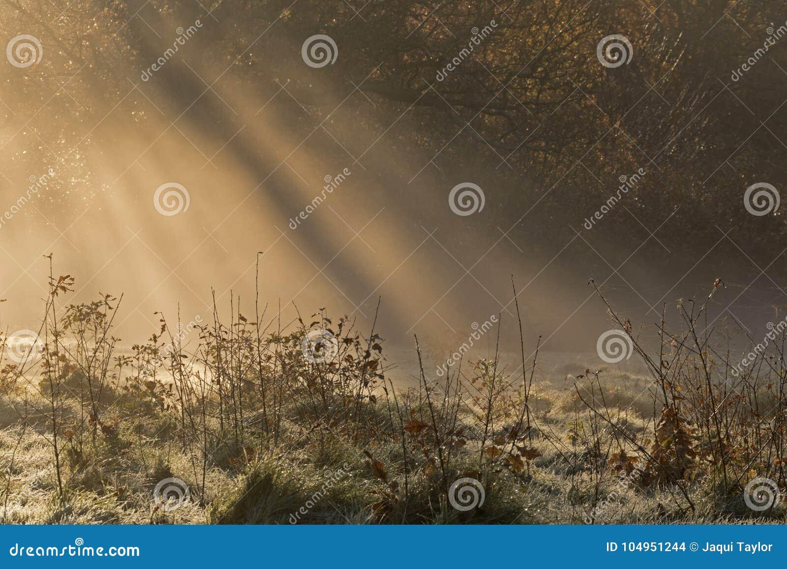 Early morning sunshine on Southampton Common