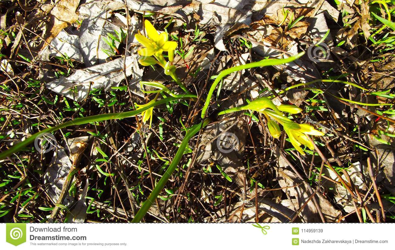 Early Spring Flowers Stock Image Image Of Travel Flower 114959139