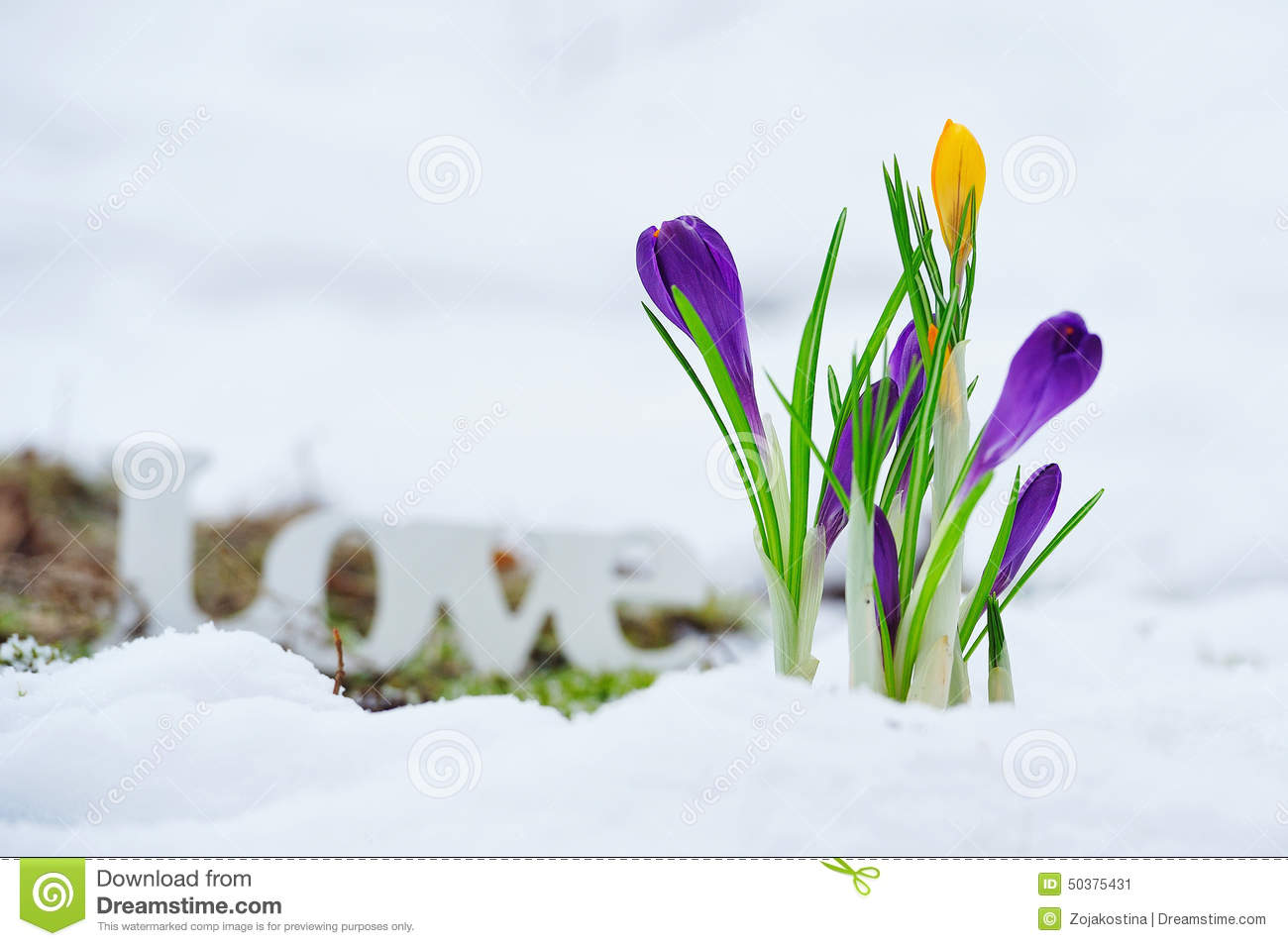 Early Spring Flowers And Love Sign Stock Image Image Of Frost