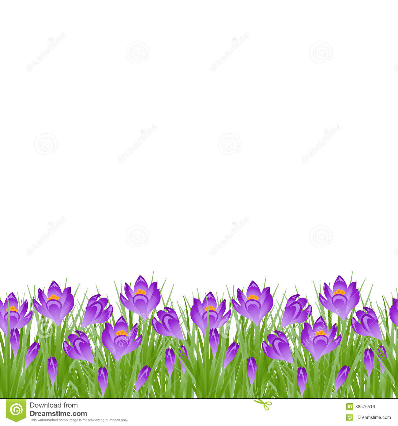 Early Spring Small Purple Flower Crocus For Easter On White