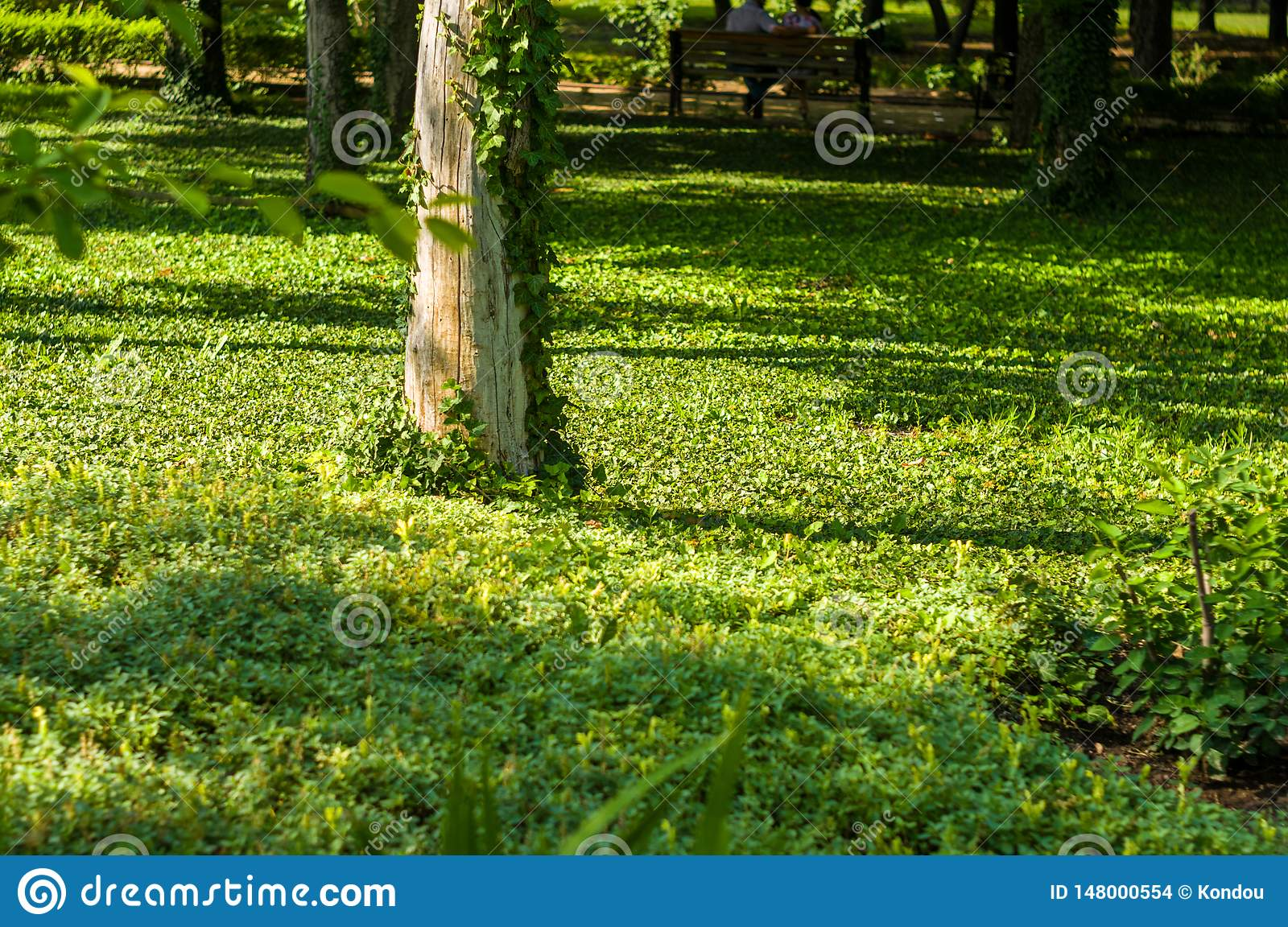 early summer landscape, old Park, trees, bushes, green grass, bright green leaves