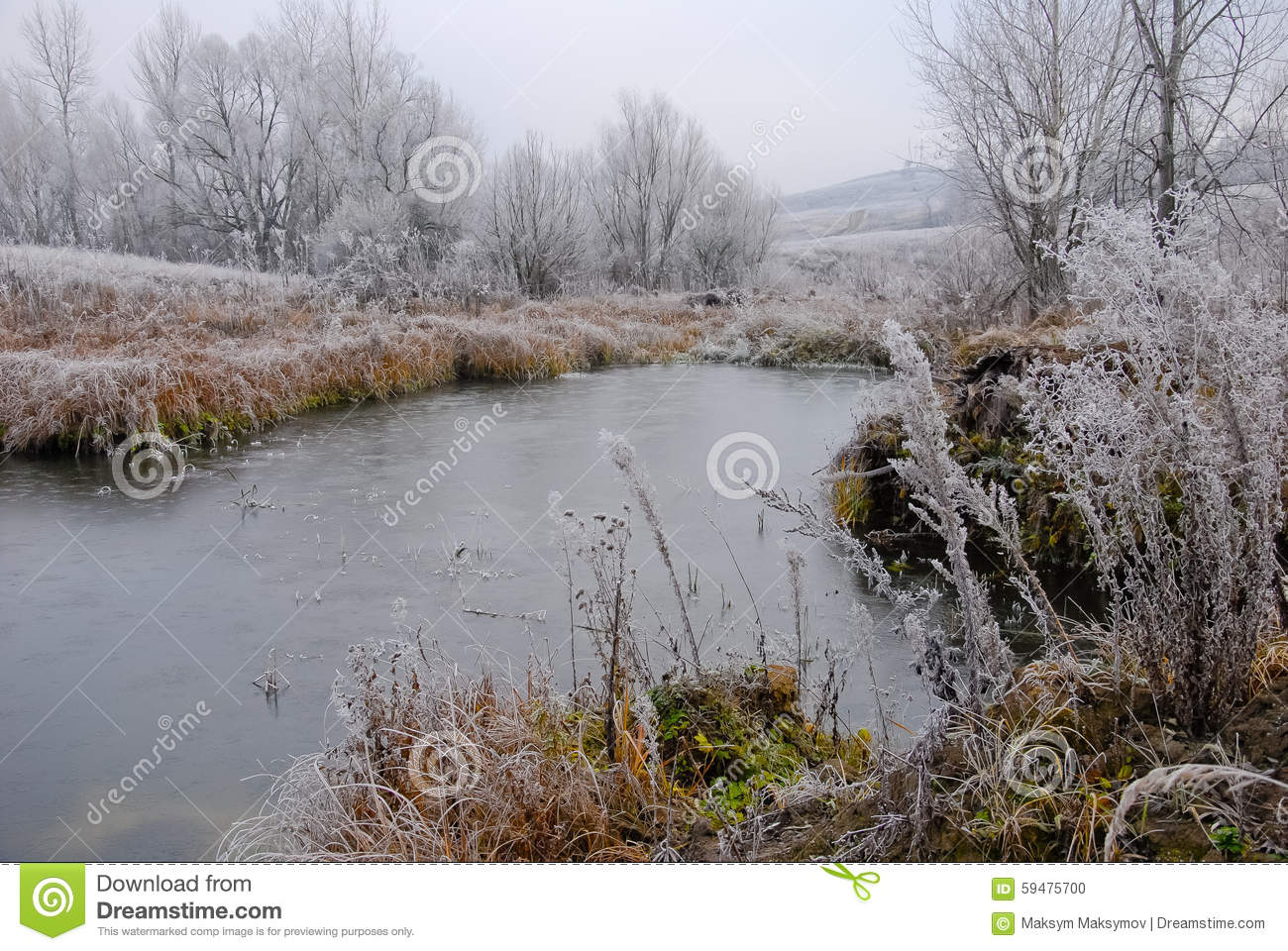 Early winter landscape with small pond frosted plants and for Winter pond plants