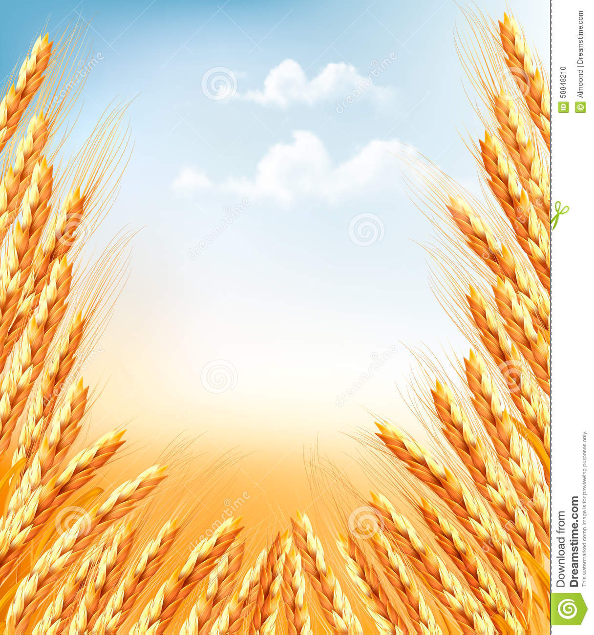 Ears of wheat background. stock vector. Illustration of ...