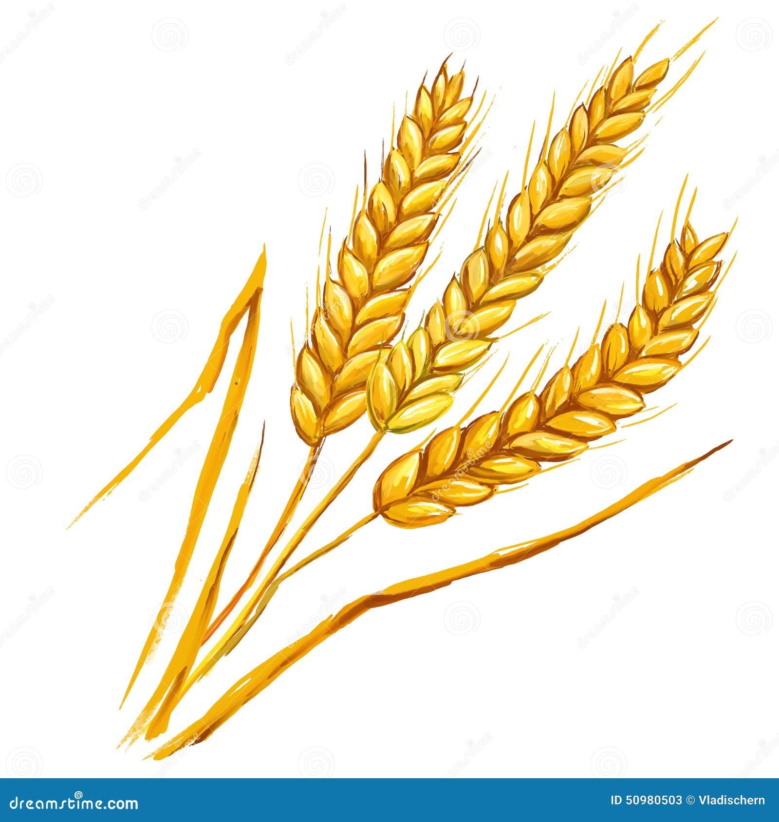 Ears Of Wheat Vector Illustration Hand Drawn Stock Vector