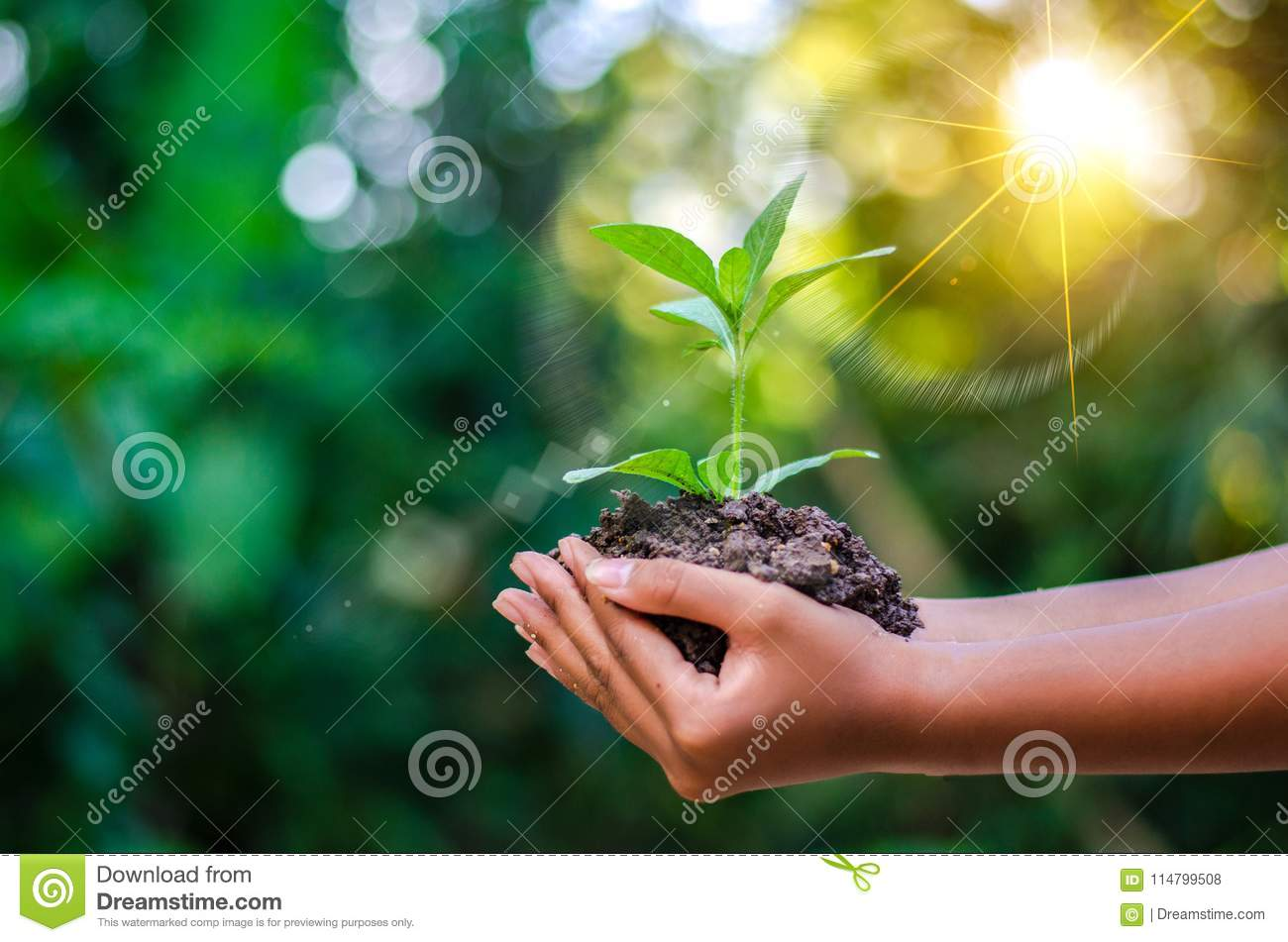 Earth Day In the hands of trees growing seedlings. Bokeh green Background Female hand holding tree on nature field grass Forest co