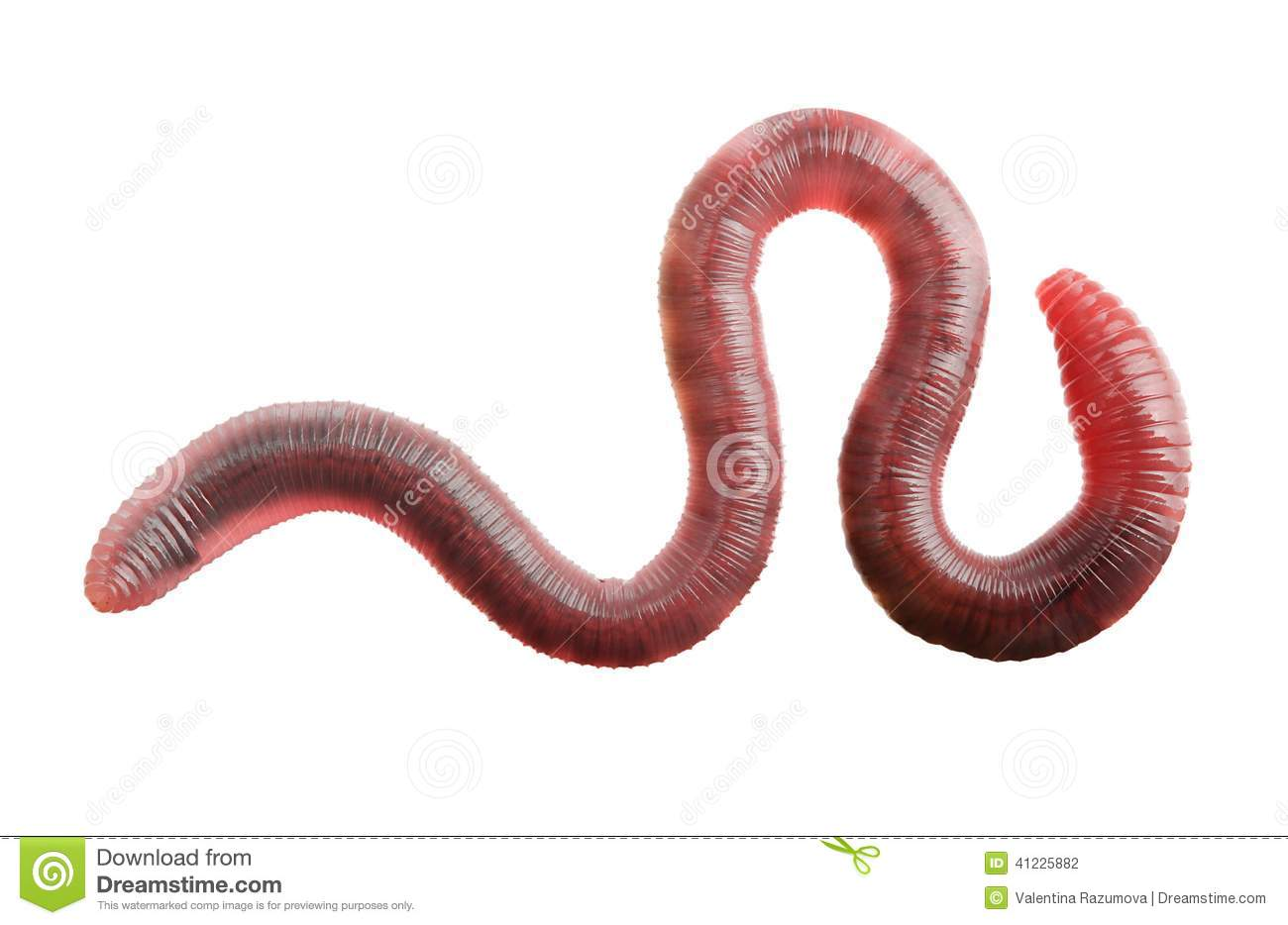 download worms