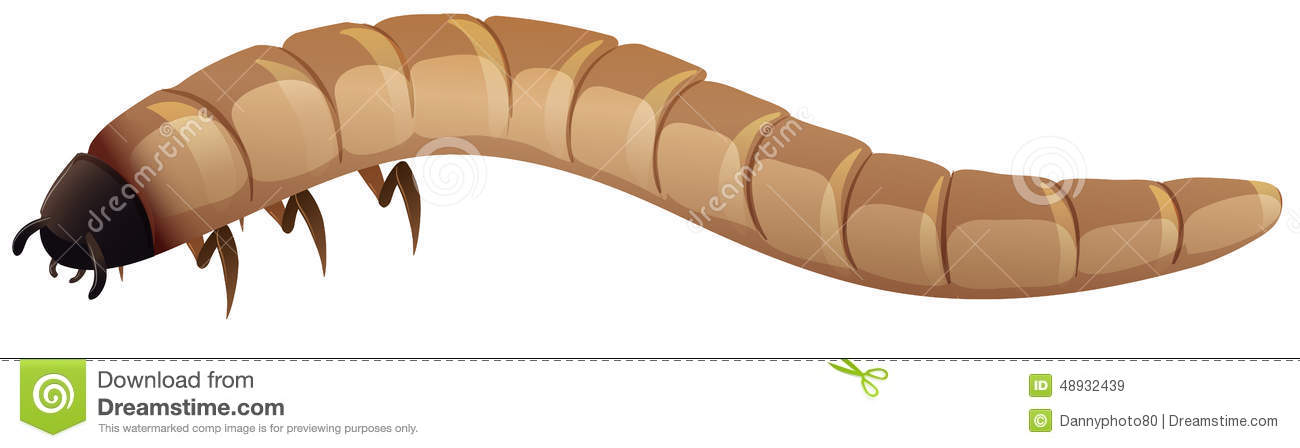 Mealworm Cartoons Illustrations Amp Vector Stock Images