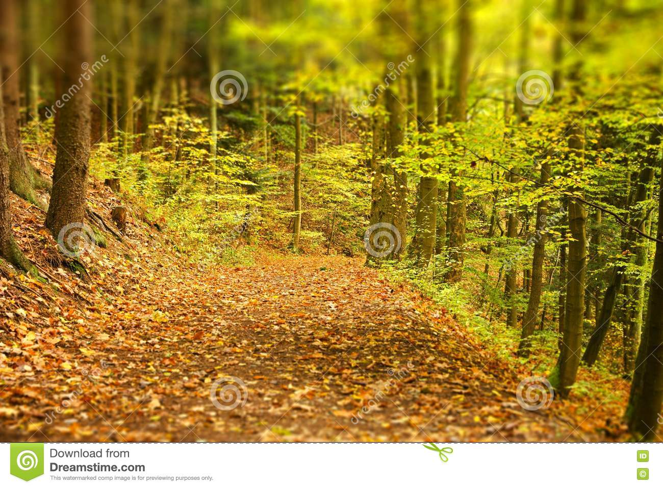 Earthy forest path