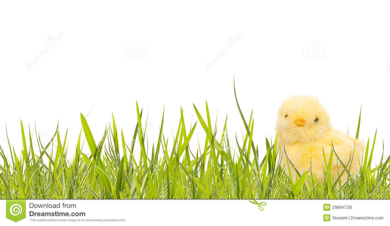 Easter Banner With Spring Grass And Baby Chicken Royalty