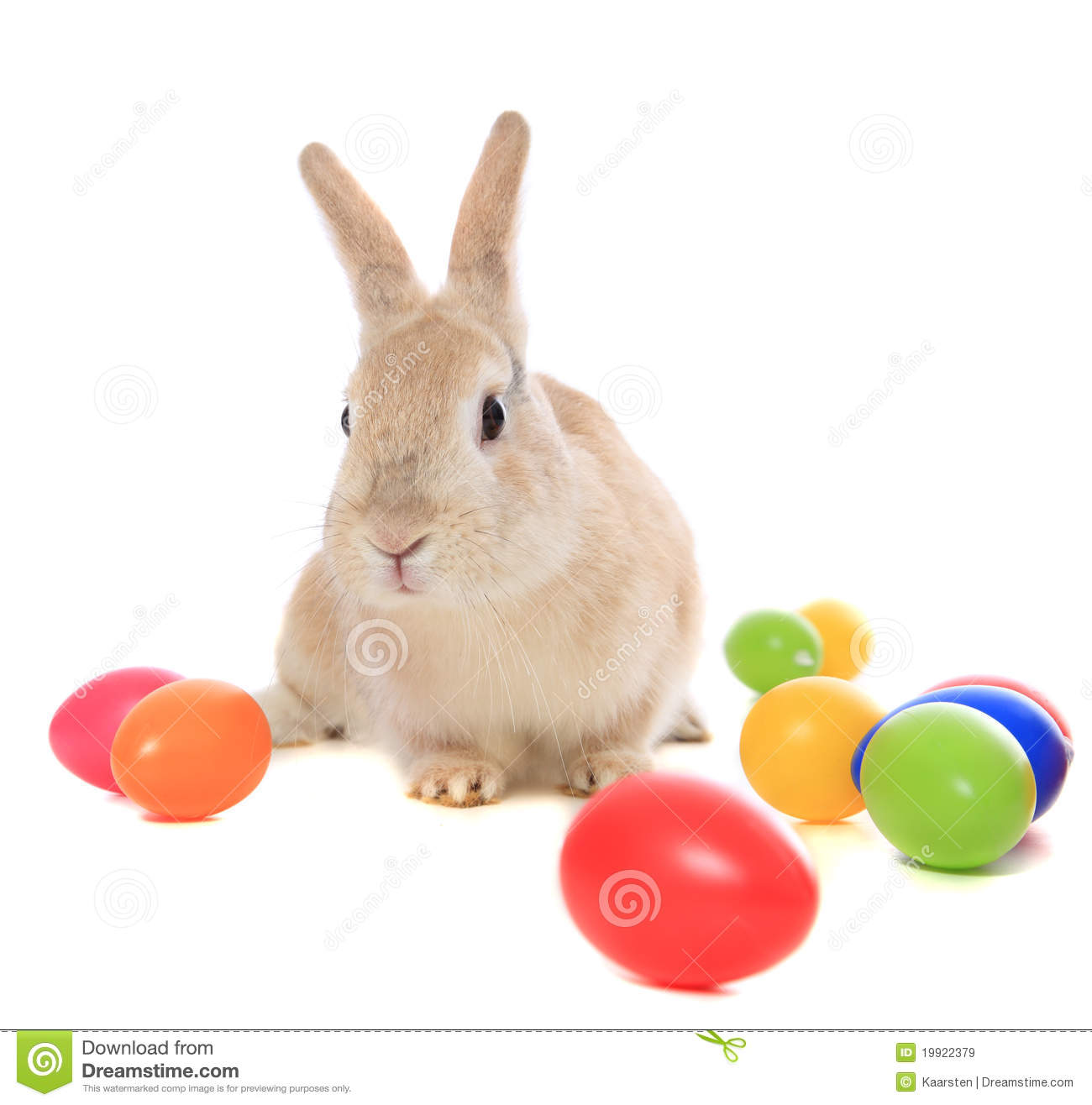 easter bunny stock photos images u0026 pictures 41 426 images
