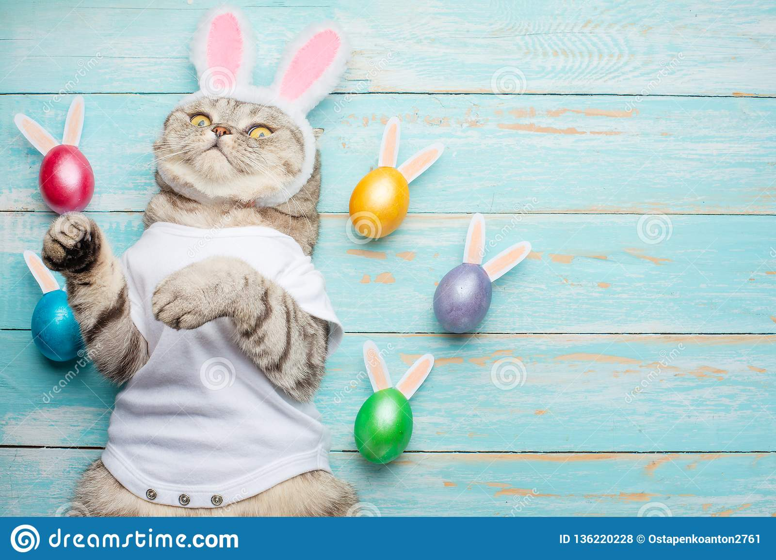 Easter bunny, cat with bunny ears and Easter colored with eggs and ears. Easter and holiday