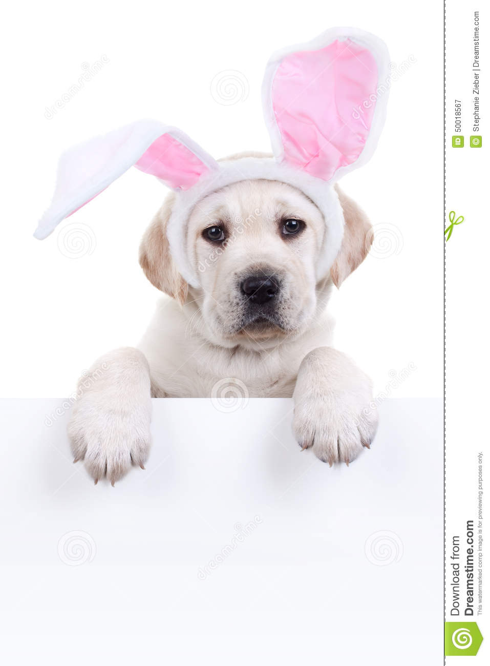Easter Bunny Dog Sign Stock Photo Image 50018567