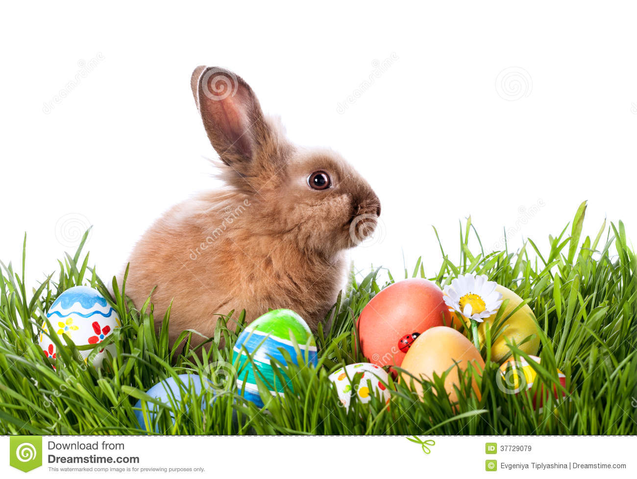 Easter Bunny And Easter Eggs Stock Image - Image of easter ...