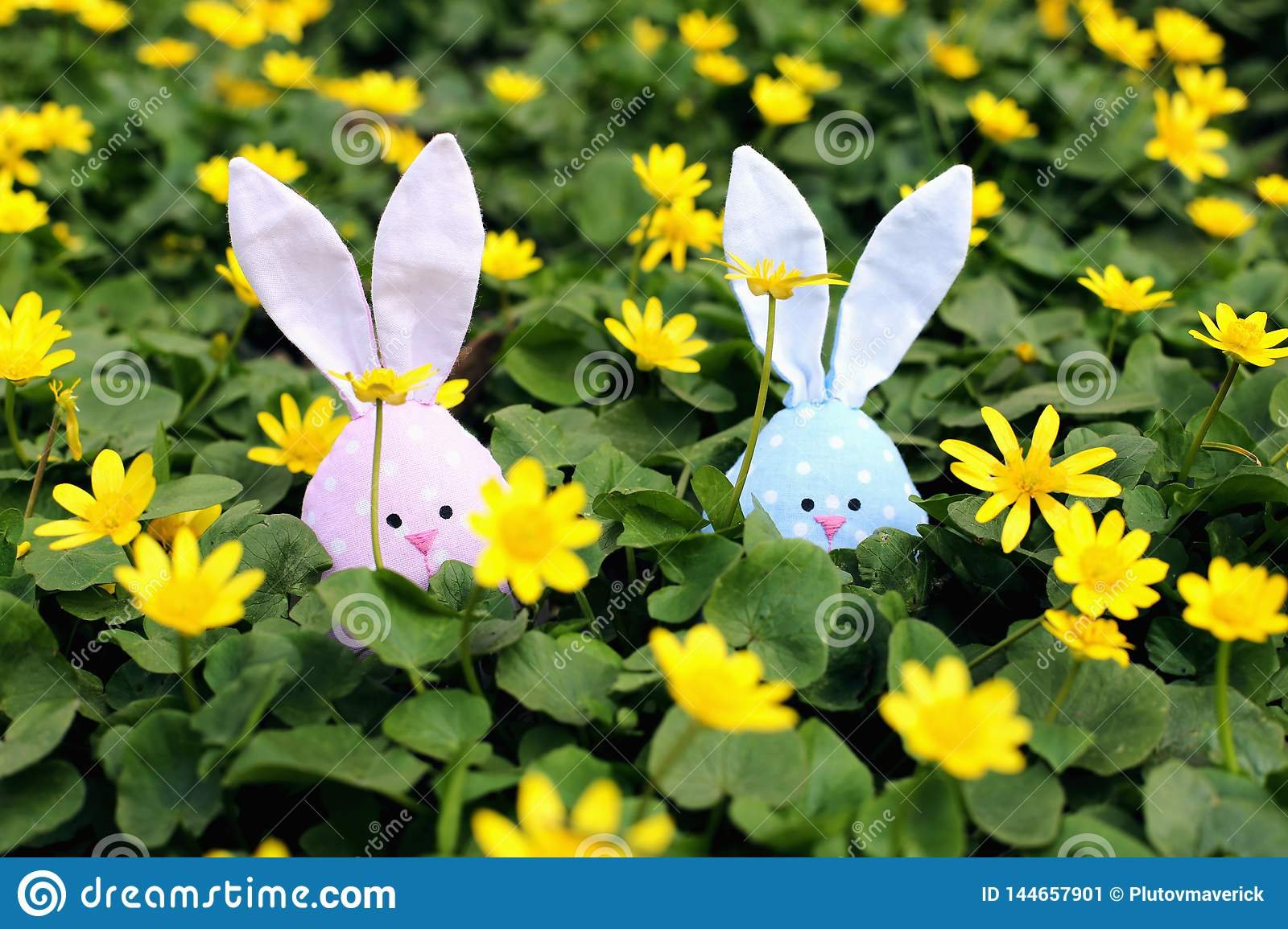 Easter bunny hidden on a flower meadow, yellow spring flowers on a meadow of green grass. Concept spring, ears hare