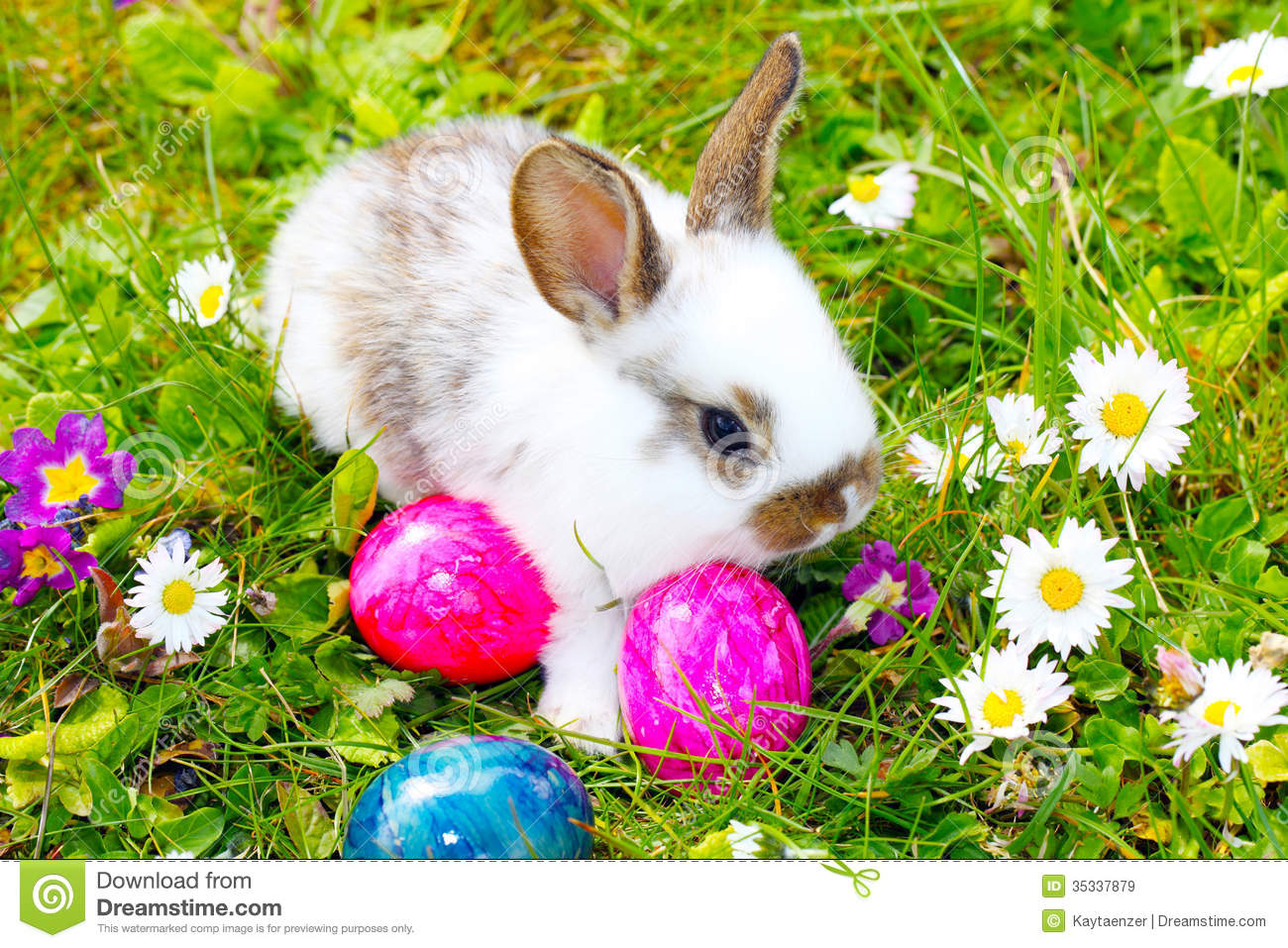 Easter Bunny hide eggs stock image. Image of easter, find - 35337879 for Real Easter Bunny With Eggs  55nar