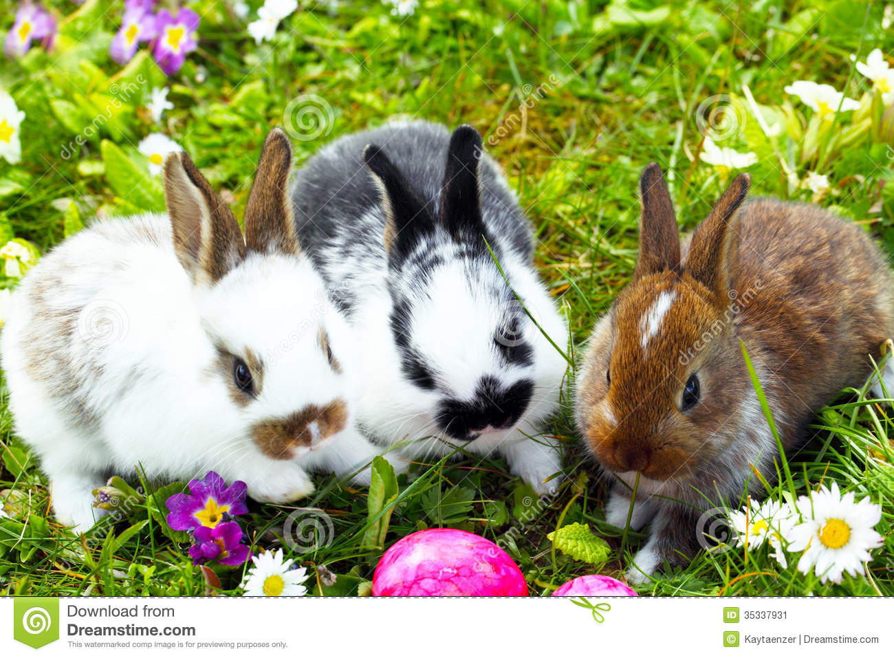 easter bunny hide eggs stock image image 35337931