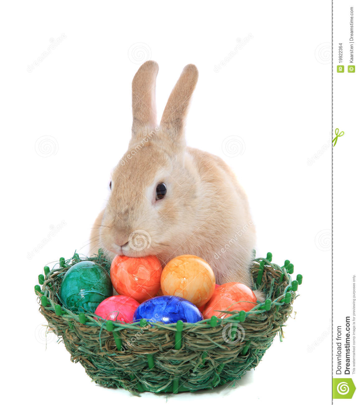 Easter bunny looking for easter eggs