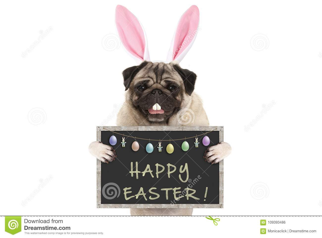 Easter bunny pug puppy dog with ears, eggs and blackboard with text happy easter