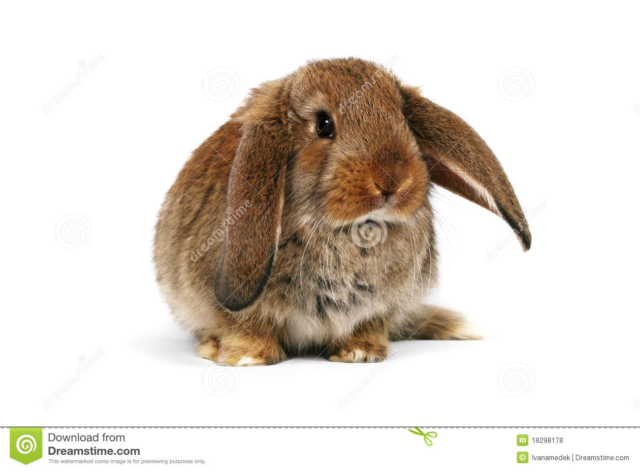 Easter Bunny On White Background Stock Photo