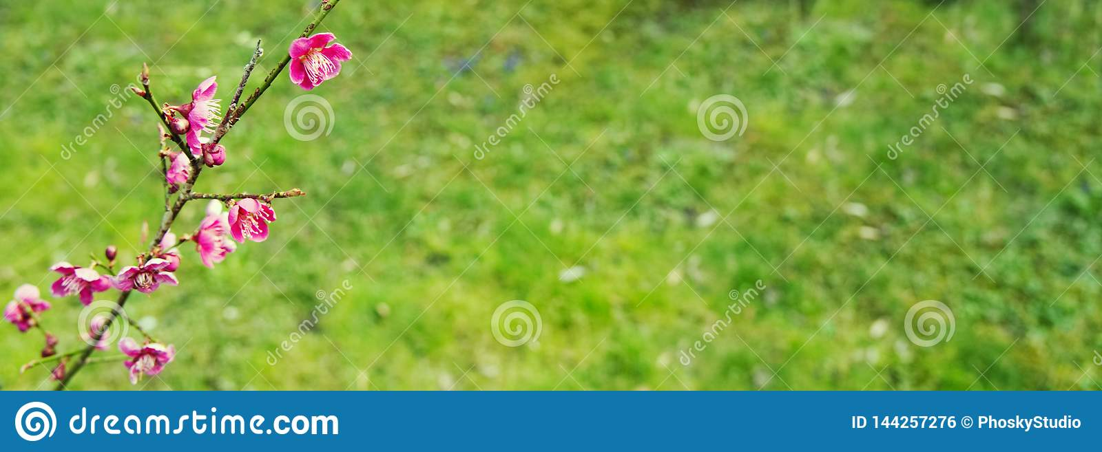 Pink flowers on a background of grass.