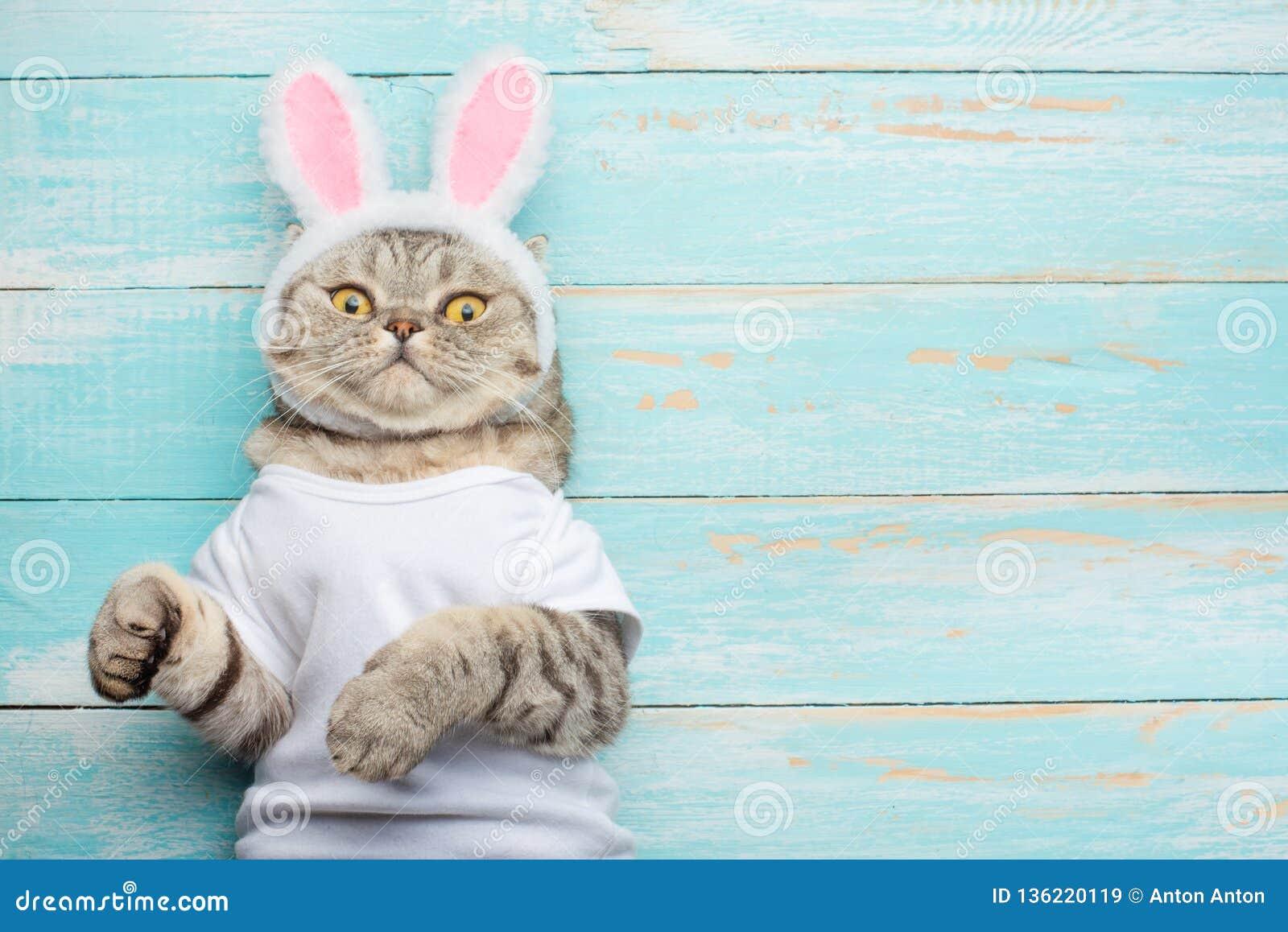 Easter Cat With Rabbit Ears Banner Easter Screensaver For Design Stock Image Image Of Background Eastereggs 136220119